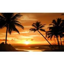Fotobehang Papier Tropisch | Oranje, Zwart | 368x254cm