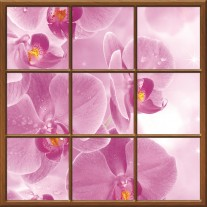 Fotobehang Bloemen | Roze |