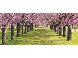 Fotobehang Bomen | Groen | 250x104cm