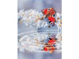 Fotobehang Papier Vlinder, Natuur | Rood | 184x254cm