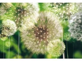 Fotobehang Papier Paardenbloemen | Groen | 254x184cm
