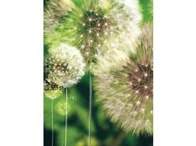 Fotobehang Papier Paardenbloem | Groen | 184x254cm