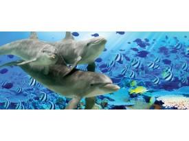 Fotobehang Dolfijn | Grijs, Blauw | 250x104cm