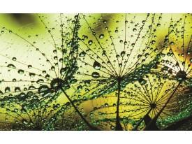 Fotobehang Vlies | Bloemen | Groen | 368x254cm (bxh)