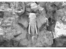 Fotobehang Vlies | Olifant | Grijs | 368x254cm (bxh)