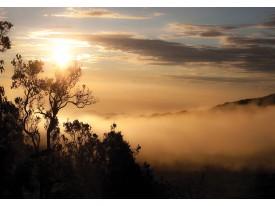 Fotobehang Vlies | Natuur | Zwart, Bruin | 368x254cm (bxh)