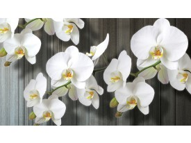 Fotobehang Vlies   Orchideeën, Bloem   Wit   368x254cm (bxh)