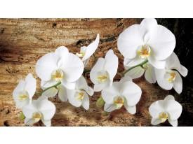 Fotobehang Vlies   Orchideeën, Bloem   Bruin   368x254cm (bxh)
