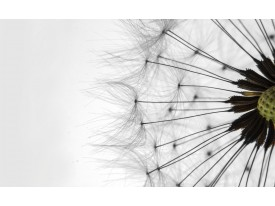 Fotobehang Papier Paardenbloem | Zwart, Wit | 254x184cm