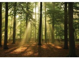 Fotobehang Vlies | Bos, Natuur | Groen | 368x254cm (bxh)