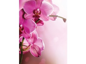 Fotobehang Papier Orchidee, Bloem | Roze | 184x254cm
