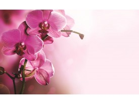 Fotobehang Papier Orchidee, Bloem | Roze | 368x254cm