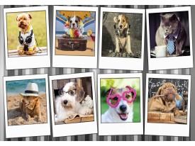 Fotobehang Vlies | Hond, Modern | Grijs, Wit | 368x254cm (bxh)