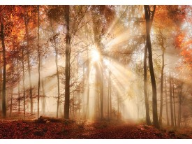 Fotobehang Vlies   Bos   Bruin, Oranje   368x254cm (bxh)