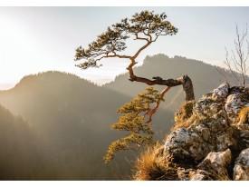 Fotobehang Vlies | Bergen | Bruin, Grijs | 368x254cm (bxh)