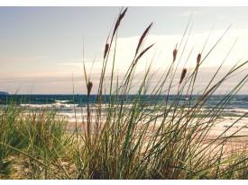 Fotobehang Vlies   Natuur, Strand   Grijs   368x254cm (bxh)