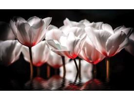 Fotobehang Bloemen, Tulpen | Wit | 104x70,5cm