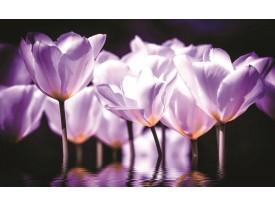 Fotobehang Bloemen, Tulpen | Paars | 416x254