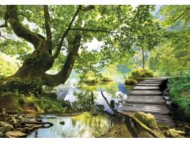 Fotobehang Vlies | Natuur, Bos | Groen | 368x254cm (bxh)