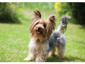 Fotobehang Vlies | Hond | Bruin, Groen | 368x254cm (bxh)