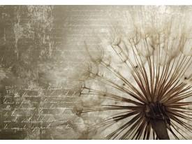 Fotobehang Vlies | Paardenbloem | Bruin | 368x254cm (bxh)