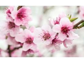 Fotobehang Bloemen, Bloesem | Roze | 104x70,5cm