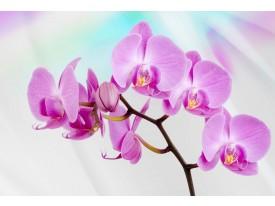 Fotobehang Papier Bloemen, Orchidee | Roze, Paars | 254x184cm