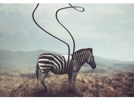 Fotobehang Vlies | Zebra, Wild | Grijs | 368x254cm (bxh)