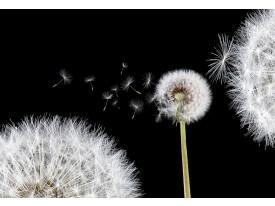 Fotobehang Papier Bloemen, Paardenbloem | Wit | 368x254cm