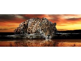 Fotobehang Wilde dieren | Bruin, Oranje | 250x104cm