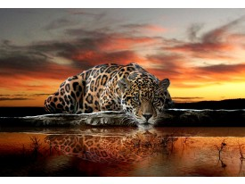 Fotobehang Wilde dieren | Bruin, Oranje | 152,5x104cm