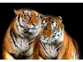 Fotobehang Vlies | Wilde dieren | Zwart | 368x254cm (bxh)