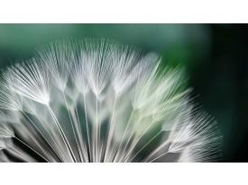 Fotobehang Papier Bloemen | Groen, Wit | 254x184cm