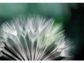 Fotobehang Vlies   Bloemen   Groen, Wit   368x254cm (bxh)