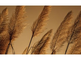 Fotobehang Natuur | Bruin | 416x254