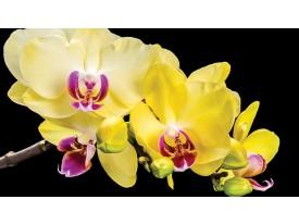Fotobehang Bloemen, Orchidee | Geel | 104x70,5cm