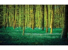 Fotobehang Bos | Groen | 208x146cm