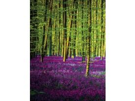 Fotobehang Papier Bos | Paars, Groen | 184x254cm