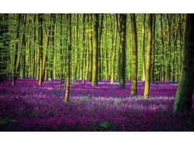 Fotobehang Vlies | Bos | Groen, Paars | 368x254cm (bxh)