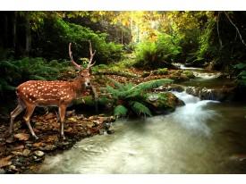 Fotobehang Bos, Natuur | Bruin, Groen | 416x254