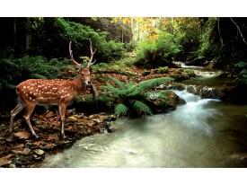 Fotobehang Vlies | Bos, Natuur | Bruin, Groen | 368x254cm (bxh)