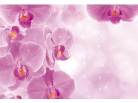 Fotobehang Bloemen, Orchidee | Roze, Wit | 208x146cm