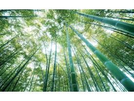 Fotobehang Bos, Natuur   Groen   416x254