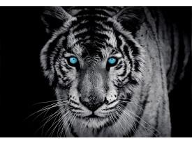 Fotobehang Papier Wilde Dieren   Blauw   368x254cm