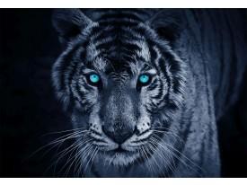 Fotobehang Wilde Dieren | Blauw | 208x146cm