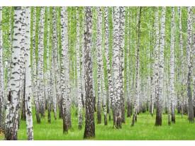 Fotobehang Bos   Groen   104x70,5cm