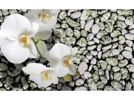Fotobehang Papier Bloemen, Stenen | Groen | 254x184cm