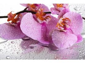 Fotobehang Papier Bloemen, Orchidee | Paars | 254x184cm
