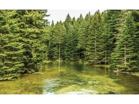 Fotobehang Vlies   Bomen   Groen   368x254cm (bxh)