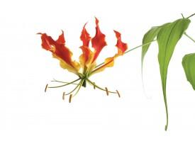 Fotobehang Bloemen | Wit, Groen | 152,5x104cm